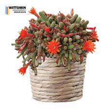 Aufkleber Wandsticker Fensteraufkleber Blume Topf Orange Blüten Pflanzen Blumen