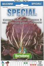 CICORIA ROSSA DI CHIOGGIA 3 SEL.CESARE MEDIO PRECOCE- SPECIAL -