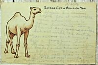 Vintage Funny Postcard Posted 1906 Camel Better Get a Hump On Antique Undivided