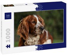 Lais Puzzle - Welsh Springer Spaniel - 1.000 Teile