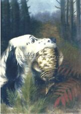 Antique Reprduction 8 X 10 Photograph Print > English Setter With Ruffed Grouse