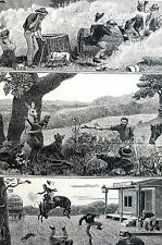 Queensland Australia BEE HIVE KANGAROO HUNT BRONCO RIDE 1883 Matted Engraving