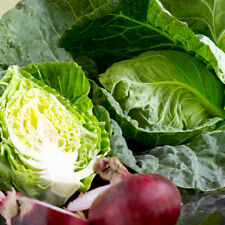 SWEETHEART CABBAGE WHEELERS IMPERIAL HERITAGE SPRING GREENS VARIETY 100 SEEDS