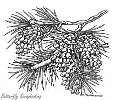 Pine Branch With Fur Cones, Wood Mounted Rubber Stamp NORTHWOODS - NEW, M7694