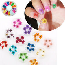 12 Color Wheel Elegant Nail Art Decor Real Dried Flowers For UV Gel Acrylic Tips