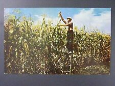 Greetings From Sioux City Iowa IA Man In Corn Field Vintage Color Postcard 1950s