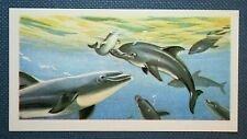 DOLPHINS  Superb Unmounted Illustrated Card