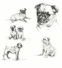 Brussels Griffon - 1963 Vintage Dog Print - Matted