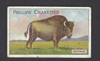 PHILLIPS - ANIMAL SERIES - #7 BUFFALO