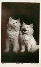 Vintage Rotary Real Photo Cat PC White Kittens Pussies' Duet 5937 A Unused