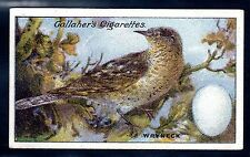 Birds Collectable Gallaher Cigarette Cards