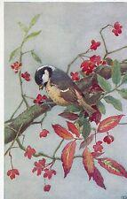 POSTCARD  BIRDS  COAL  TIT  MOUSE    Austin