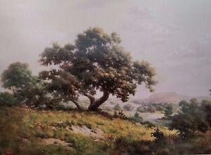 DALHART WINDBERG, Big Tree Print, Large Live Oak, Texas Hill Country