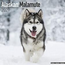 Kalender 2021 Alaska Malamute Alaskan Malamut Dog Hund Wandkalender