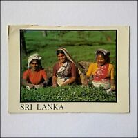 Sri Lanka Tea Pluckers Nuwara Eliya 1994 Large Postcard (P405)