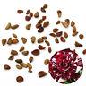 30pcs Rare Dragon Rose Flower Seeds Garden Plants Seeds Flower Seeds Hot
