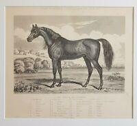 1898 Antique Print ARAB TOORKMAN CHARGER HORSE VICTORIAN EQUINE Art Original