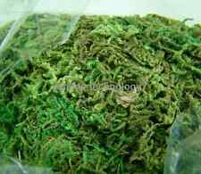 300g of Artificial Dried Moss for Flower DIY Arrangements Home Garden Art Deco