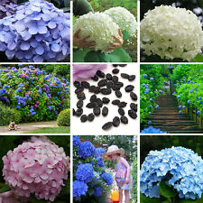 Lots 50X Hydrangea Colorful Flower Plant Seeds Home Garden Perennial Rare Seeds