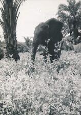 MOYEN CONGO c. 1940 -  Éléphant  - P 1302