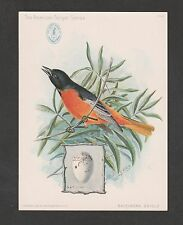 KAPPYSCOLLECTABLE 0019 CIRCA 1900 BALTIMORE ORIOLE AD CARD SINGER SEWING MACHINE