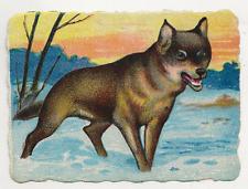 54/566 SAMMELBILD WOLF