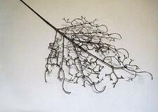 künstlicher Zweig Gras Grasstiel Frost Eis silber 80 cm 305614-00 F38