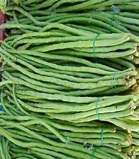 snake bean red dragon 15 ASIAN VEGETABLE LONG SNAKE BEANS