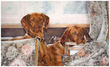 Paintings/Posters/Prints Vizsla Collectables