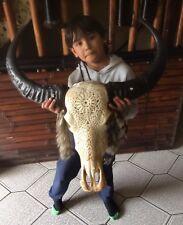 LONGHORN El Gigante Carving Knochen Real Bone Skull Longhorn Little Big Horn