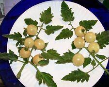 50 SNOW WHITE CHERRY TOMATO White Skin Lycopersicon Fruit Vegetable Seeds + Gift