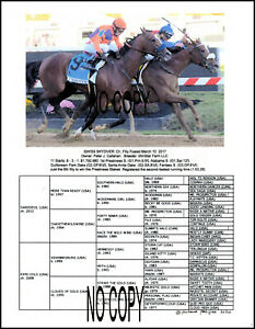 SWISS SKYDIVER Preakness winning filly 8.5 by 11 Picture with pedigree