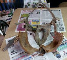 Vintage Bull Cow Blinders, Decor, Rodeo, Cowboy Decor