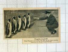 1955 King Penguins At London Zoo Lineup For Keeper George Newson