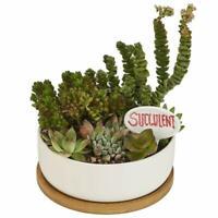 Nattol 8 5 Inch Succulent Planter In Rectangle Window Box