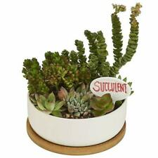 "6.3"" Rectangle Ceramic Succulent Cactus Flower Plant Container with Bamboo Base"