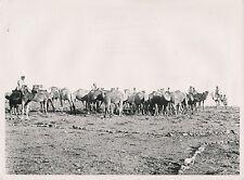 SYRIE c. 1940 -  Chameaux au Paturage  Bédouins  - DIV 7322