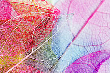STUNNING COLOURFUL DRIED LEAVES ABSTRACT CANVAS #335 A1 CANVAS CRAFTS PICTURE