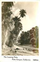 1940s Coachella California Leaning Palm RPPC real photo postcard 10439
