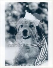 1978 Cute Benji Dog Wearing Christmas Scarf Santa Hat Press Photo