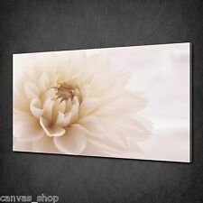 BEAUTIFUL CREAM DAHLIA FLOWER MODERN WALL ART CANVAS PRINT PICTURE READY TO HANG
