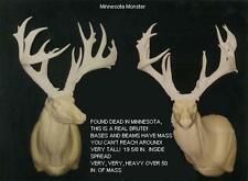 """UNFINISHED MASSIVE WHITETAIL REPLICA SCORES 217""""  ANTLER DEER ANTLERS TAXIDERMY"""