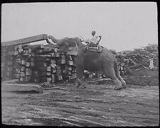 Glass Magic Lantern Slide MAN ON AN ELEPHANT MOVING TIMBER C1900 PHOTO