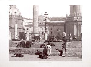 STAMPA FOTO ALINARI ROMA - UN CAPRARO AL FORO TRAIANO, 1890 ca.