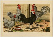 Antique Print-MALINES CHICKEN-FOWL-MECHELSE HOEN-PLATE 5-Nuyens-Bungartz-1882