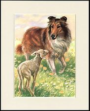 ROUGH COLLIE AND LAMB LOVELY DOG PRINT MOUNTED READY TO FRAME