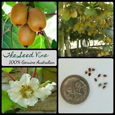 10+ ORGANIC GOLDEN KIWI FRUIT SEEDS (Actinidia chinensis) Fruit Flower Vine