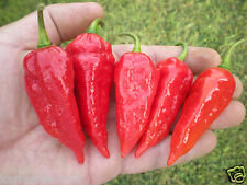 (10) RED DEVIL'S TONGUE PEPPER SEEDS