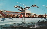(U)  Rancho Palos Verdes, CA - Marineland of the Pacific - High Flying Dolphins