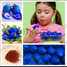 300 PEZZI Semi Blu Arrampicata FRAGOLA piante bonsai giardino albero frutta biologica R